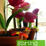 Flower Pot Dessert – Easy Spring Dessert for Kids