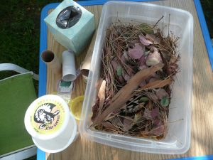 Fall Sensory Bin: Simple Play for Toddlers