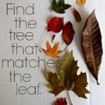 Outside Fall Activity: Find that tree!