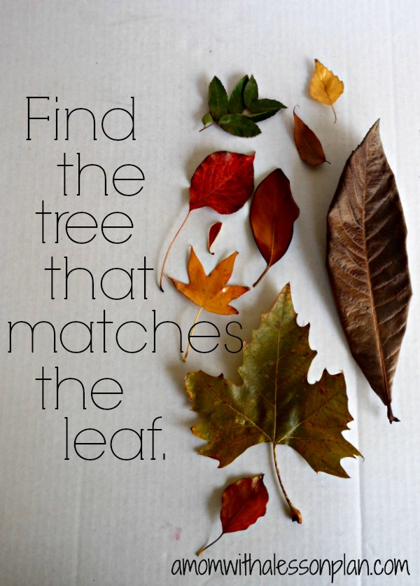 Outside Fall Activity for kids: Find that tree!