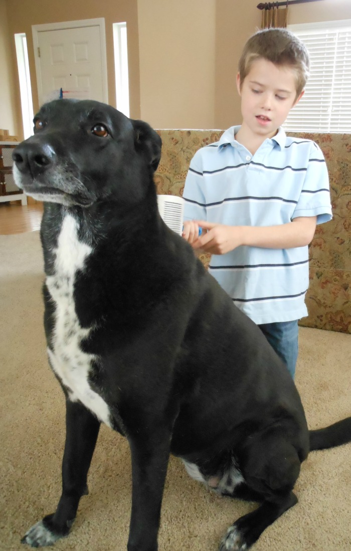 great list of ways for kids to care for dogs