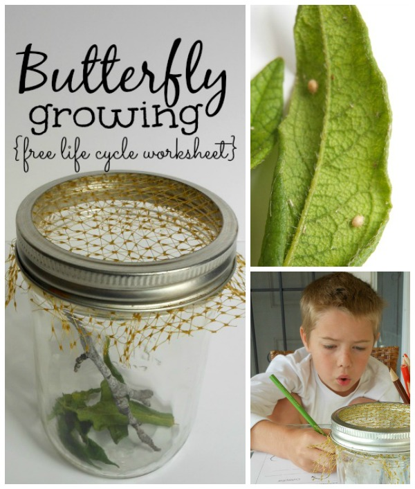 Butterfly life cycle worksheet + Super simple caterpillar home