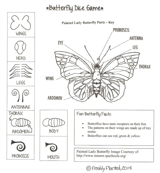 Parts of a Butterfly Dice Game Printable